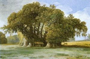 Sant'Alfio, il Castagno dei Cento Cavalli: in Sicilia l'albero più grande del mondo?