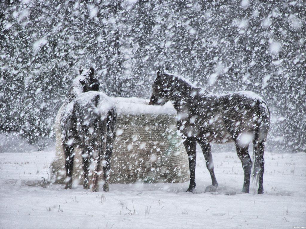 Sicilia, ritorna la neve: attesi blizzard tra Madonie, Nebrodi ed Etna nord.